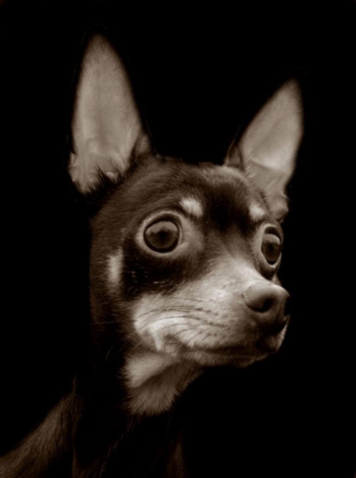 ritratti-foto-di-cani-randagi-abbandonati-traer-05