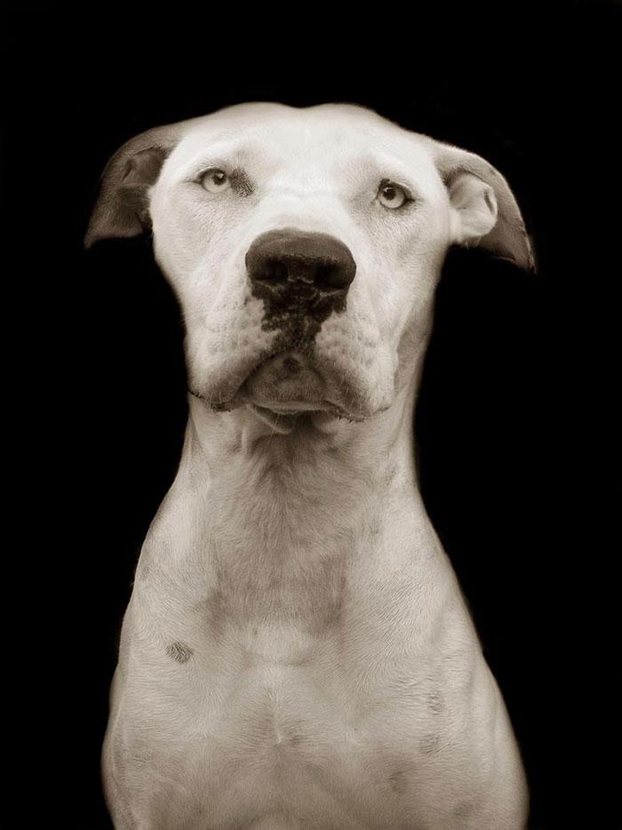 ritratti-foto-di-cani-randagi-abbandonati-traer-06