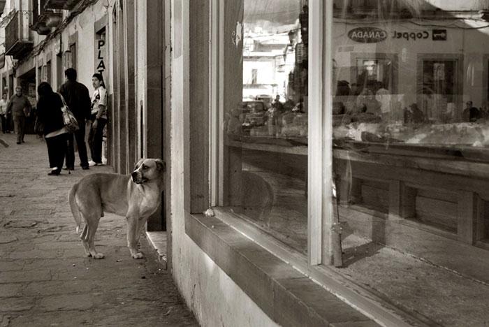 ritratti-foto-di-cani-randagi-abbandonati-traer-07