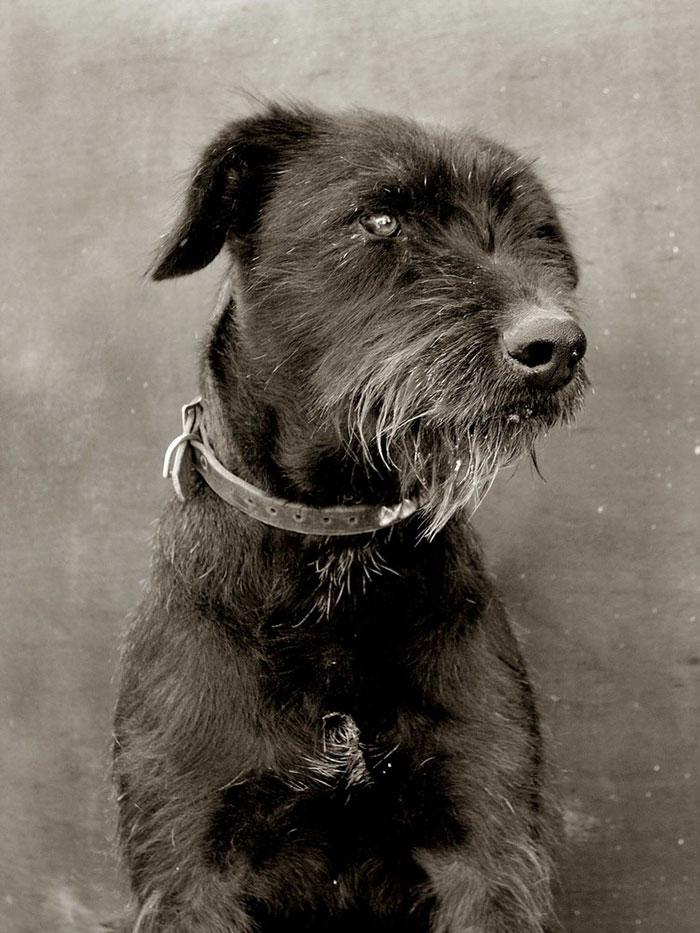 ritratti-foto-di-cani-randagi-abbandonati-traer-10