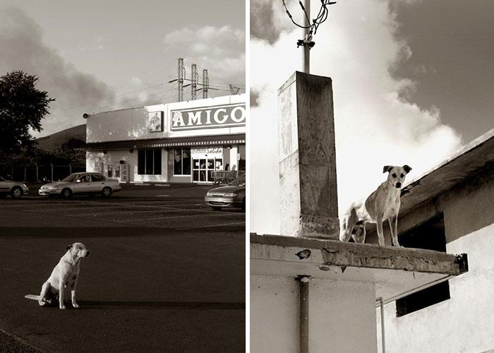 ritratti-foto-di-cani-randagi-abbandonati-traer-11