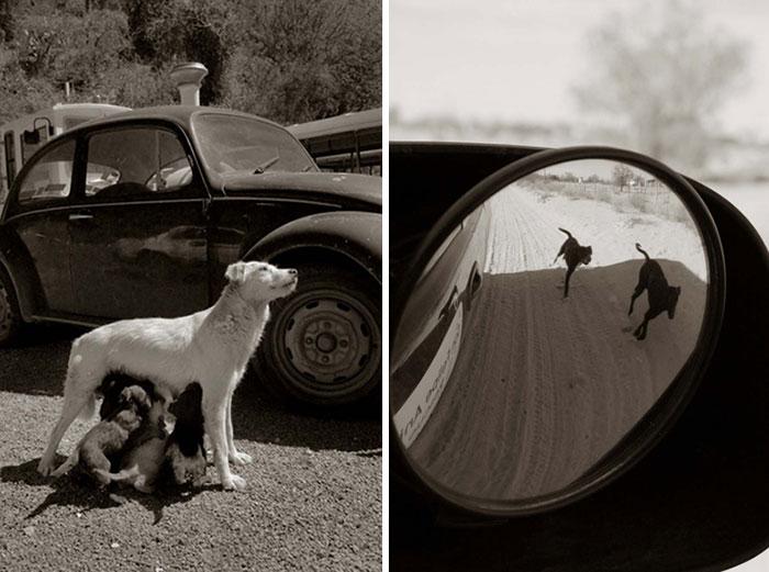 ritratti-foto-di-cani-randagi-abbandonati-traer-12