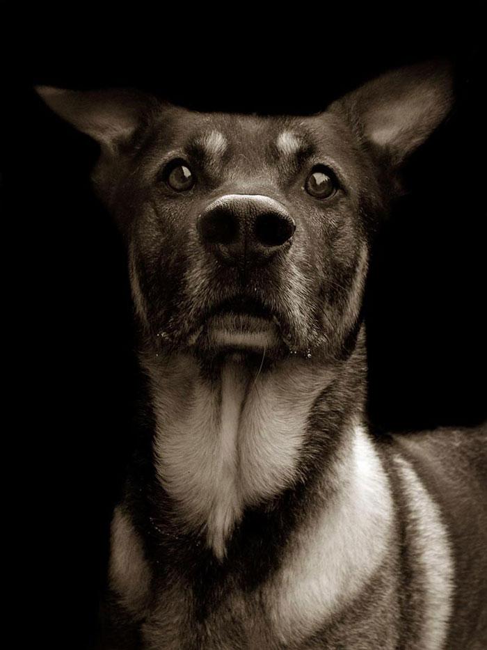ritratti-foto-di-cani-randagi-abbandonati-traer-13