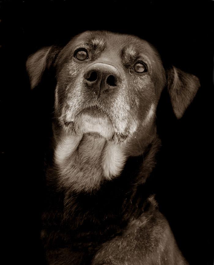 ritratti-foto-di-cani-randagi-abbandonati-traer-14