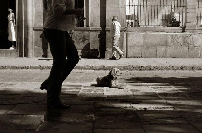 ritratti-foto-di-cani-randagi-abbandonati-traer-16