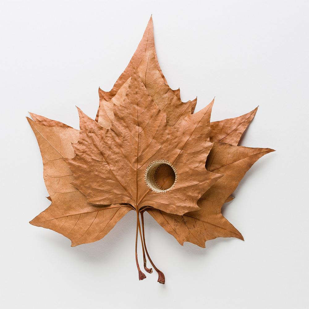 sculture-foglie-secche-uncinetto-filo-arte-susanna-bauer-01