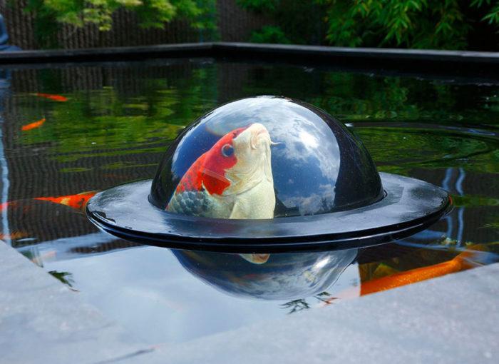 semi-sfera-cupola-galleggiante-pesci-carpe-koi-floating-fish-dome-1