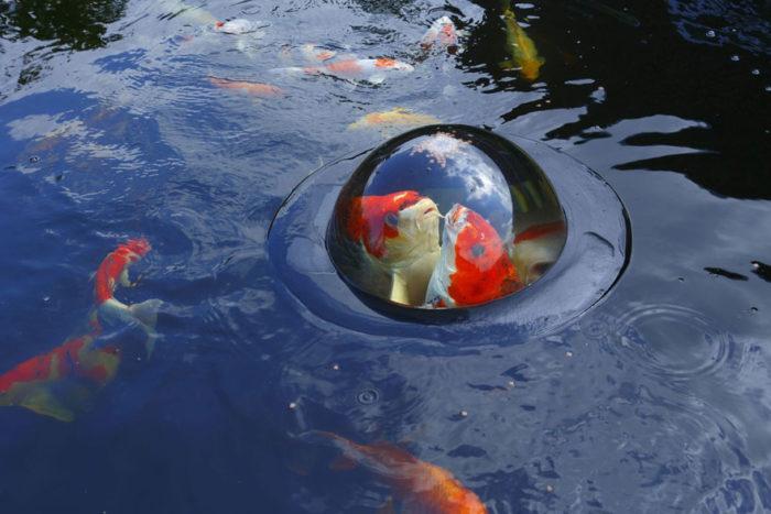 semi-sfera-cupola-galleggiante-pesci-carpe-koi-floating-fish-dome-4