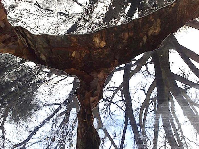 splendide-installazioni-specchi-legno-natura-lee-borthwick-07