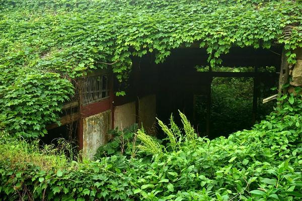 villaggio-abbandonato-natura-verde-zhoushan-cina-1
