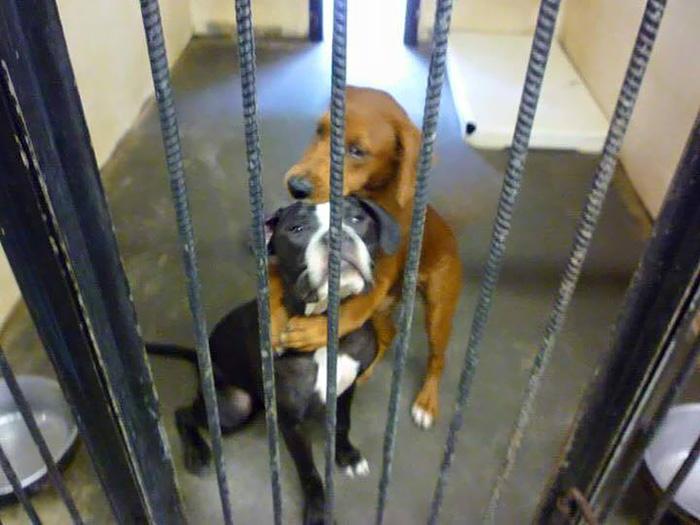 abbraccio-cani-canile-salva-loro-vte-1