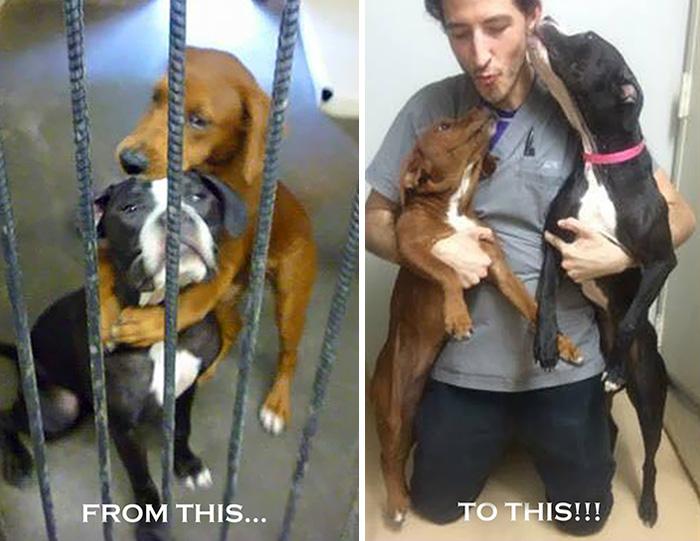 abbraccio-cani-canile-salva-loro-vte-4