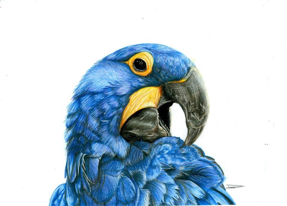 acquarelli-disegni-matita-dany-lizeth-06
