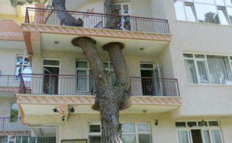 31 ingegnosi edifici in armonia con la natura che incorporano alberi e piante