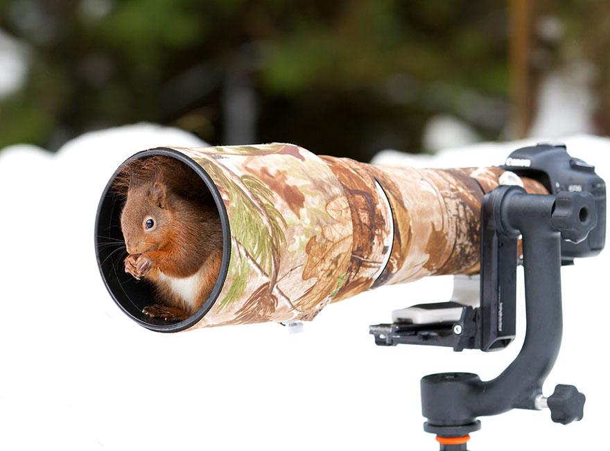 animali-con-macchina-fotografica-aiutano-fotografi-05