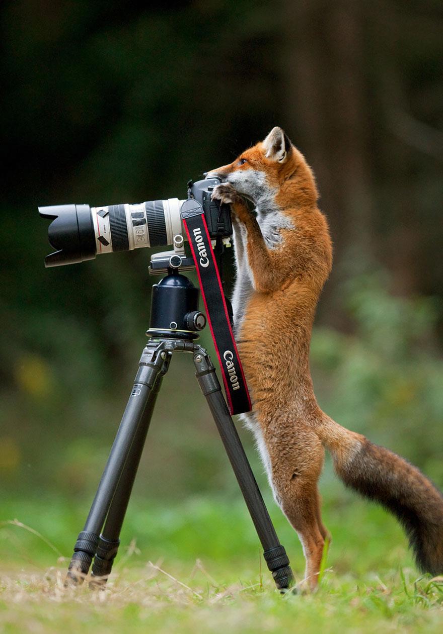 animali-con-macchina-fotografica-aiutano-fotografi-07
