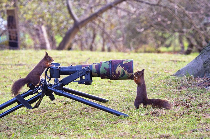 animali-con-macchina-fotografica-aiutano-fotografi-08