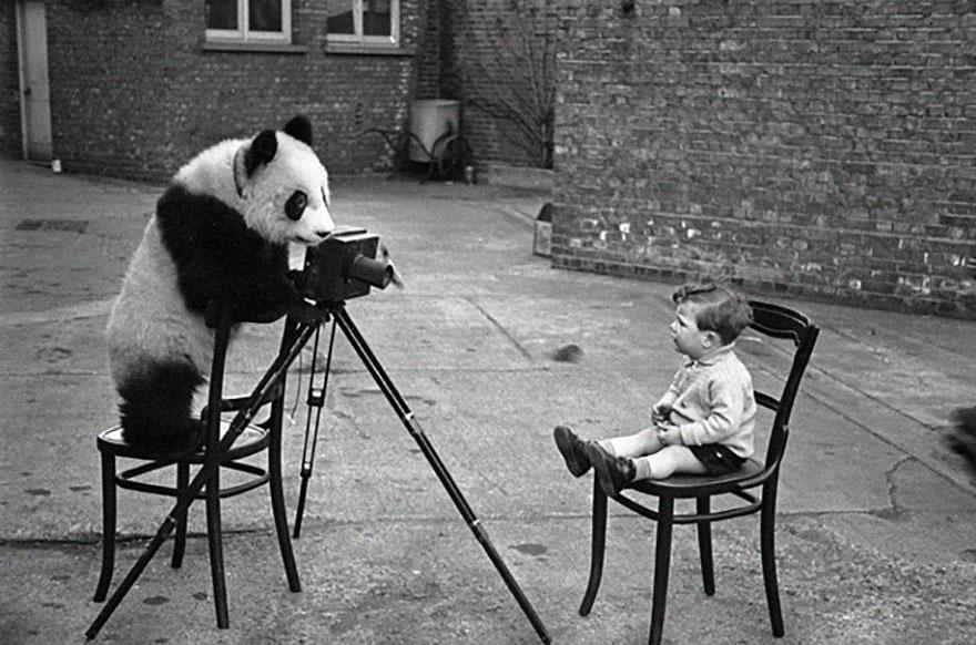 animali-con-macchina-fotografica-aiutano-fotografi-09