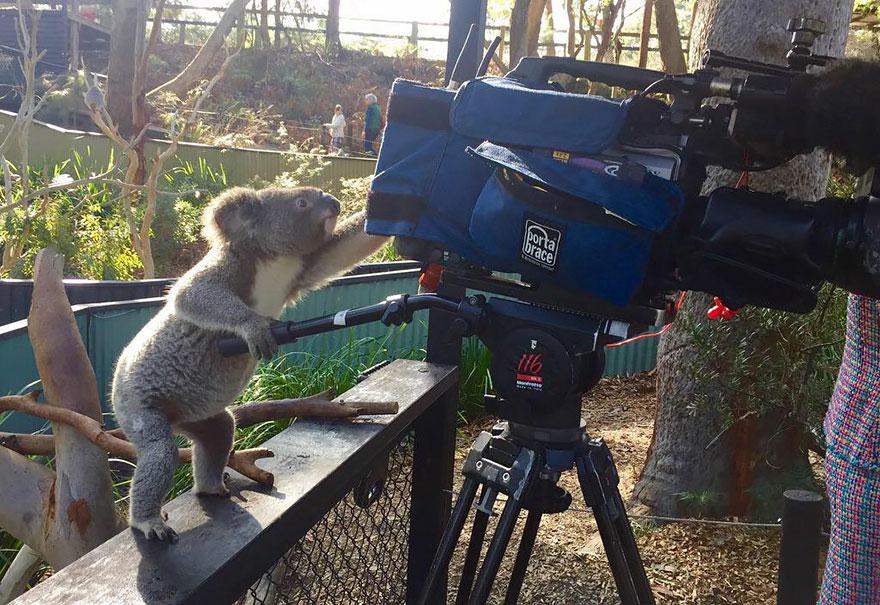 animali-con-macchina-fotografica-aiutano-fotografi-10