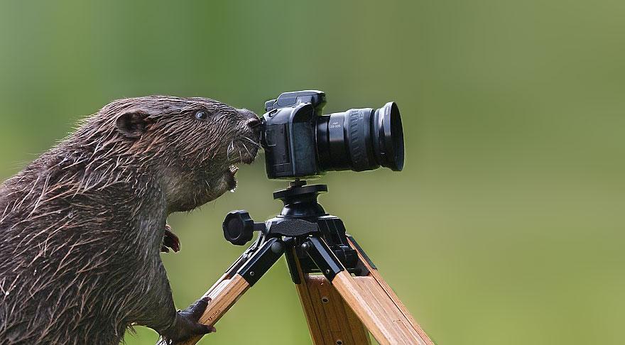 animali-con-macchina-fotografica-aiutano-fotografi-11