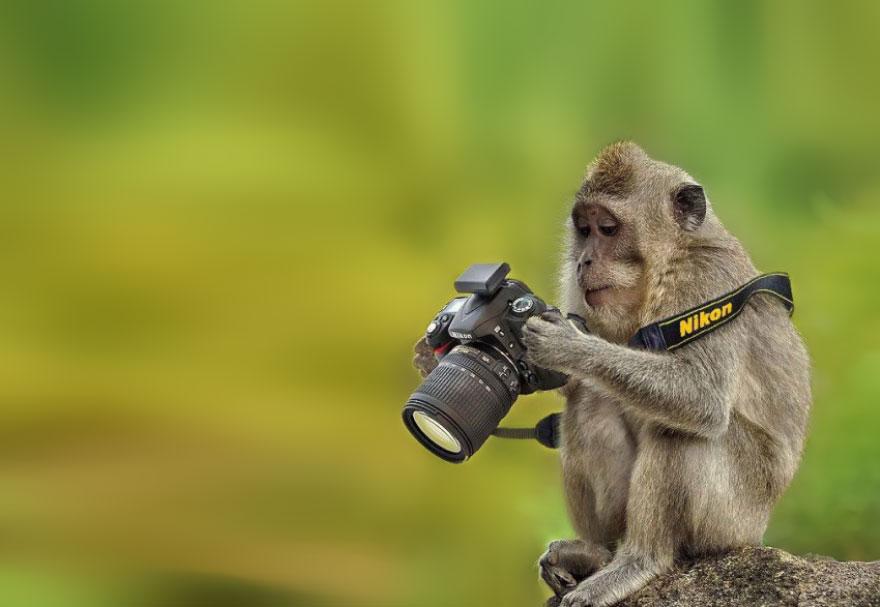 animali-con-macchina-fotografica-aiutano-fotografi-12