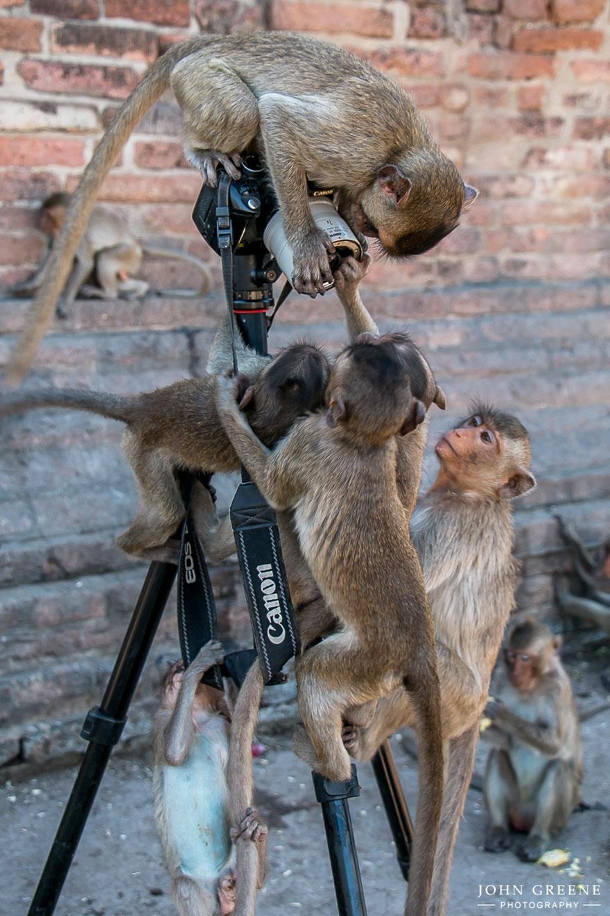 animali-con-macchina-fotografica-aiutano-fotografi-13