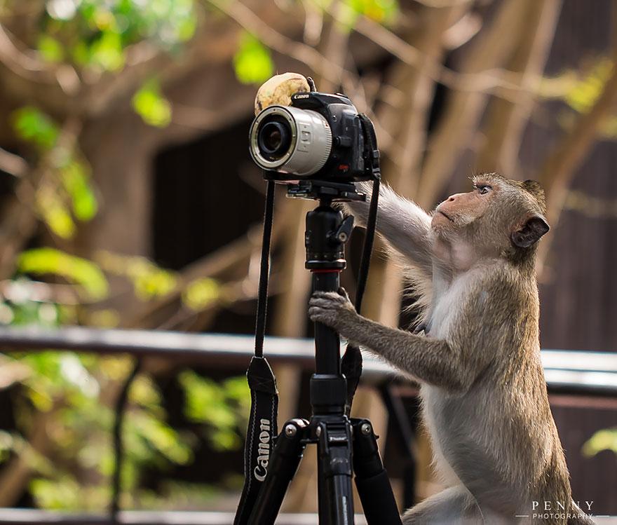 animali-con-macchina-fotografica-aiutano-fotografi-15