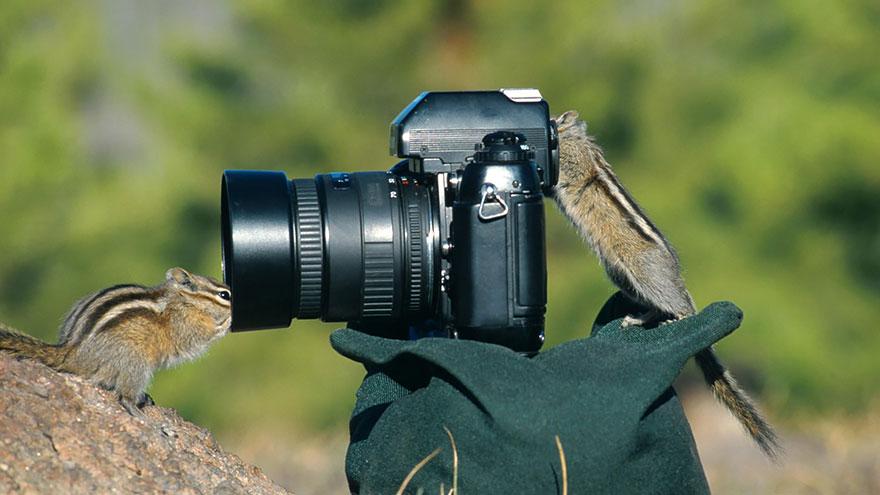 animali-con-macchina-fotografica-aiutano-fotografi-18
