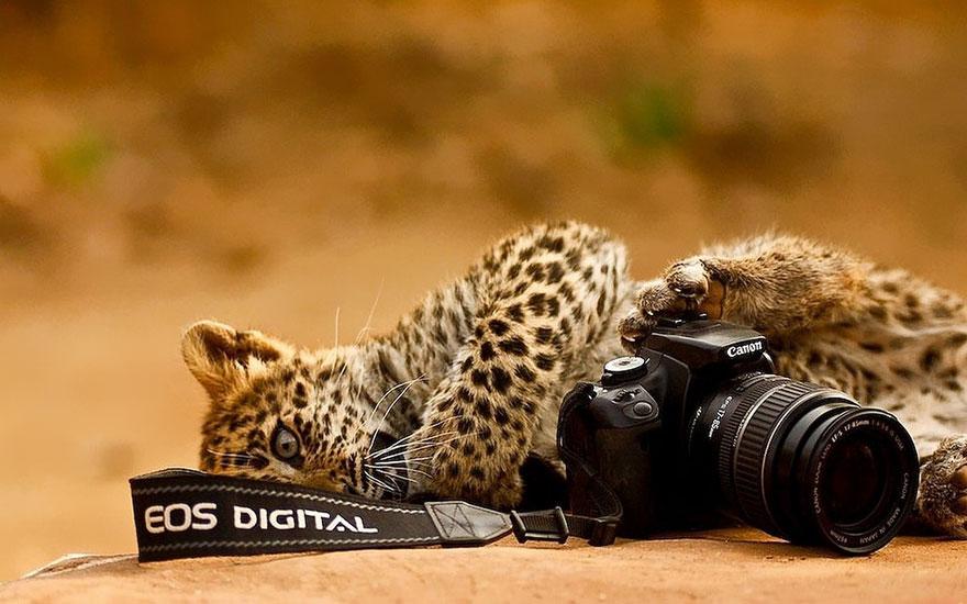 animali-con-macchina-fotografica-aiutano-fotografi-19