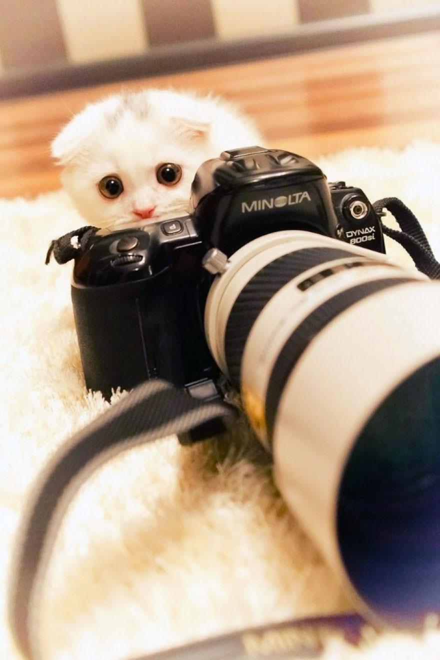 animali-con-macchina-fotografica-aiutano-fotografi-20