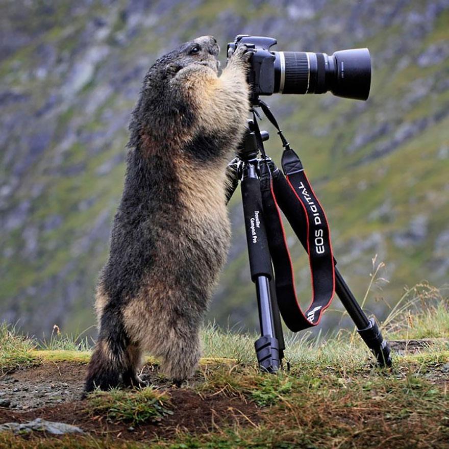 animali-con-macchina-fotografica-aiutano-fotografi-21