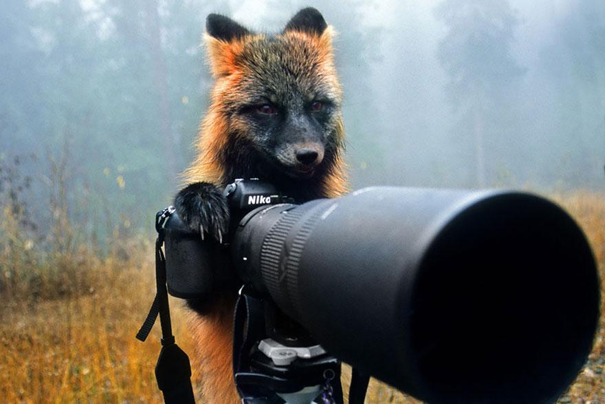 animali-con-macchina-fotografica-aiutano-fotografi-22