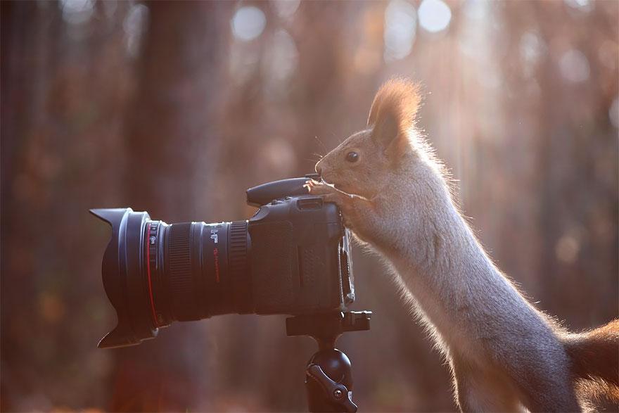 animali-con-macchina-fotografica-aiutano-fotografi-23