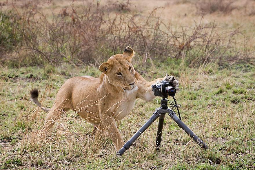 animali-con-macchina-fotografica-aiutano-fotografi-24