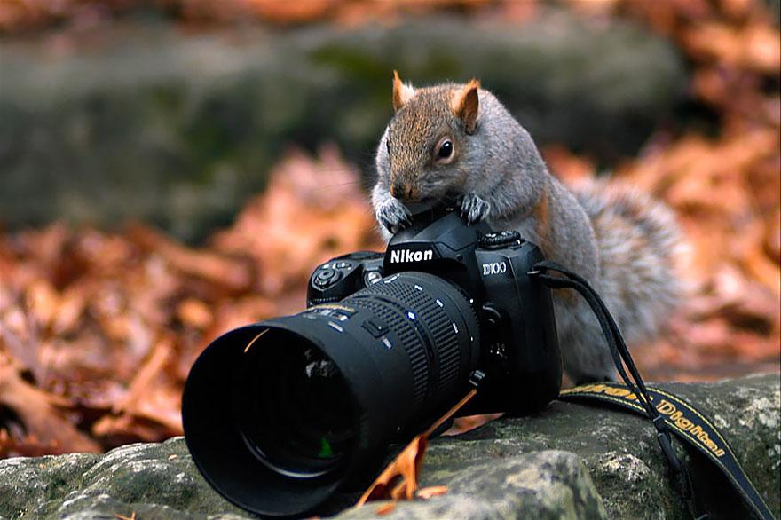 animali-con-macchina-fotografica-aiutano-fotografi-25