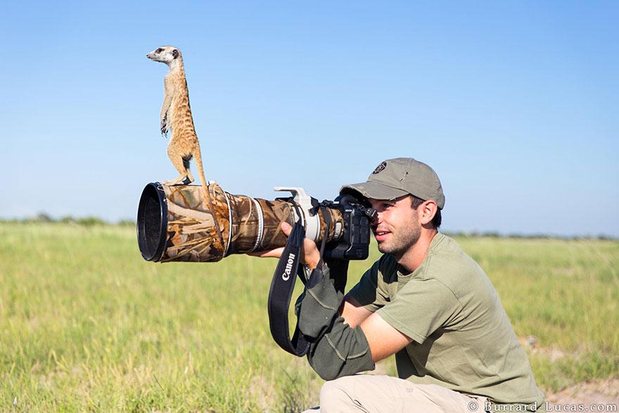 animali-con-macchina-fotografica-aiutano-fotografi-26