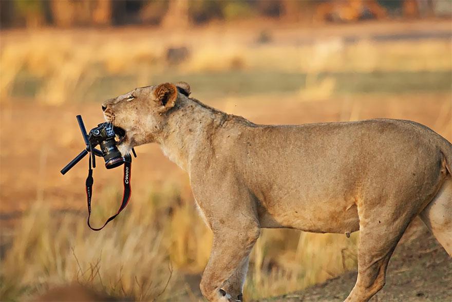 animali-con-macchina-fotografica-aiutano-fotografi-27