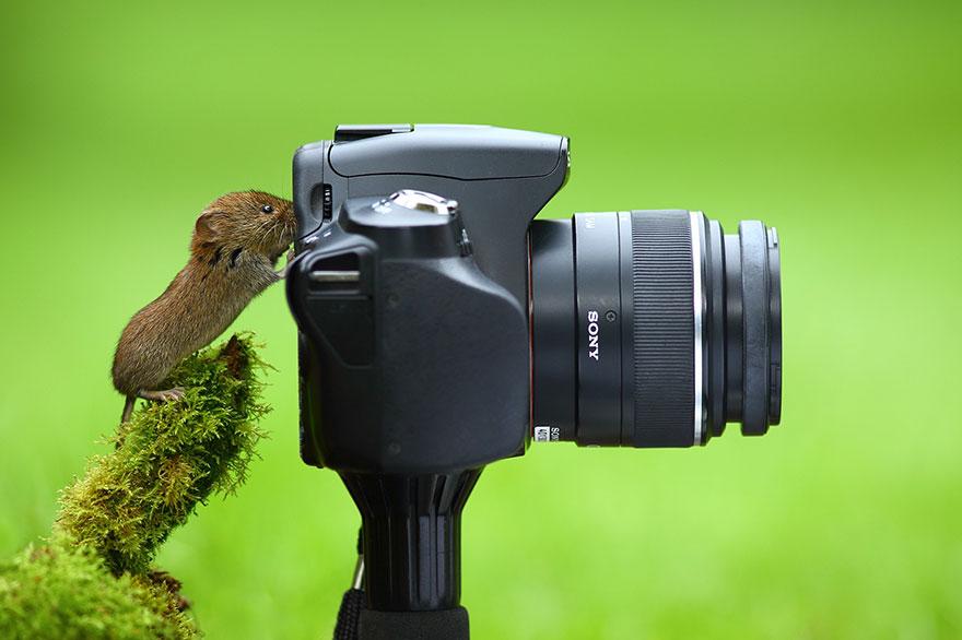 animali-con-macchina-fotografica-aiutano-fotografi-29
