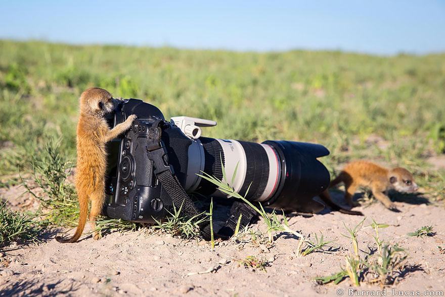 animali-con-macchina-fotografica-aiutano-fotografi-30