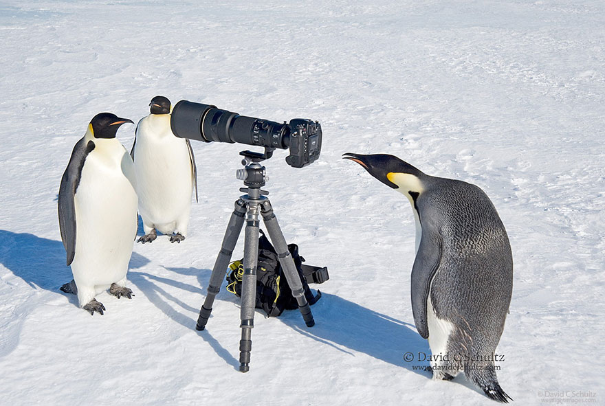 animali-con-macchina-fotografica-aiutano-fotografi-31