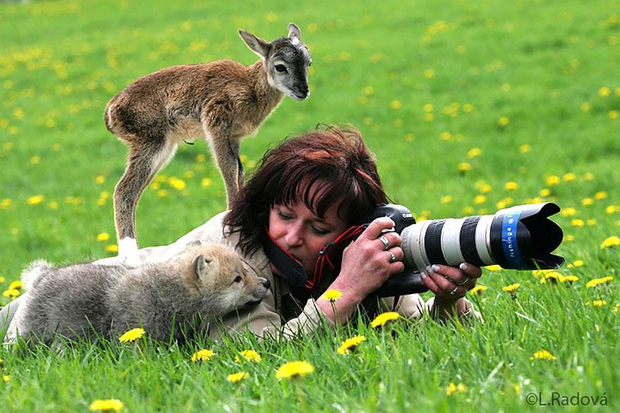 animali-con-macchina-fotografica-aiutano-fotografi-33
