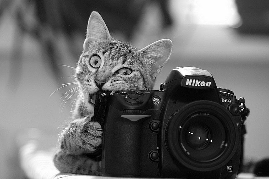 animali-con-macchina-fotografica-aiutano-fotografi-34