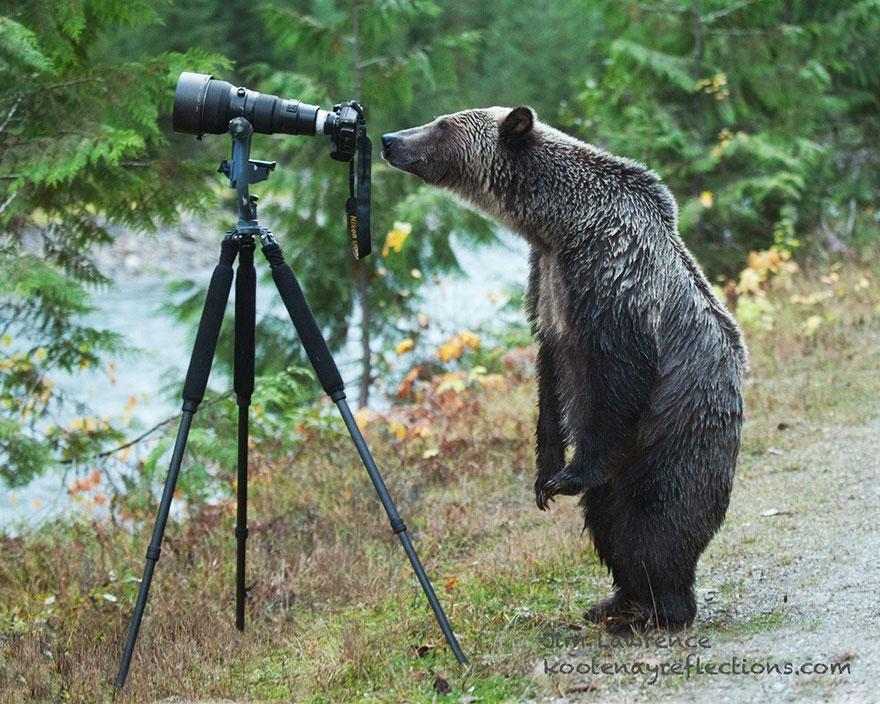 animali-con-macchina-fotografica-aiutano-fotografi-35