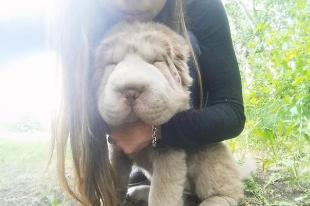 cane-cucciolo-carino-sembra-orsacchiotto-tonkey-13