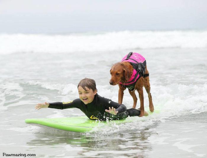cane-da-terapia-golden-retriever-surf-ricochet-06