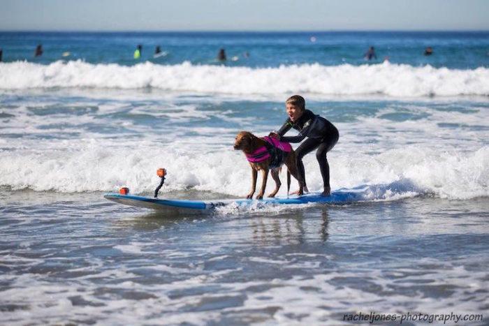 cane-da-terapia-golden-retriever-surf-ricochet-08