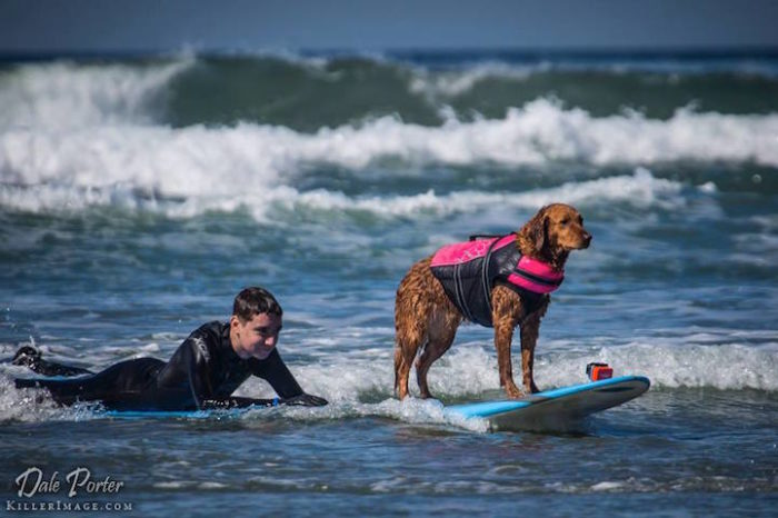 cane-da-terapia-golden-retriever-surf-ricochet-10