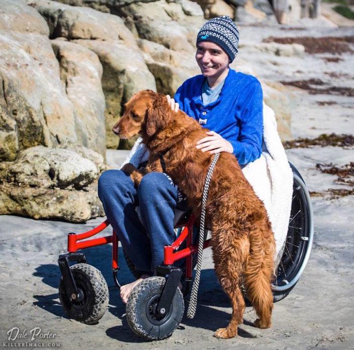 cane-da-terapia-golden-retriever-surf-ricochet-11