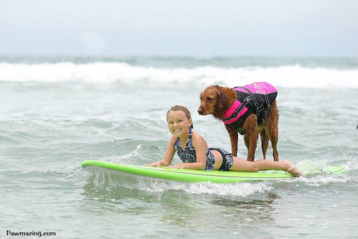 cane-da-terapia-golden-retriever-surf-ricochet-12