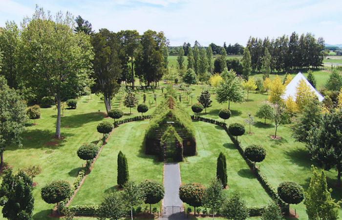 chiesa-fatta-di-alberi-nuova-zelanda-barry-cox-2